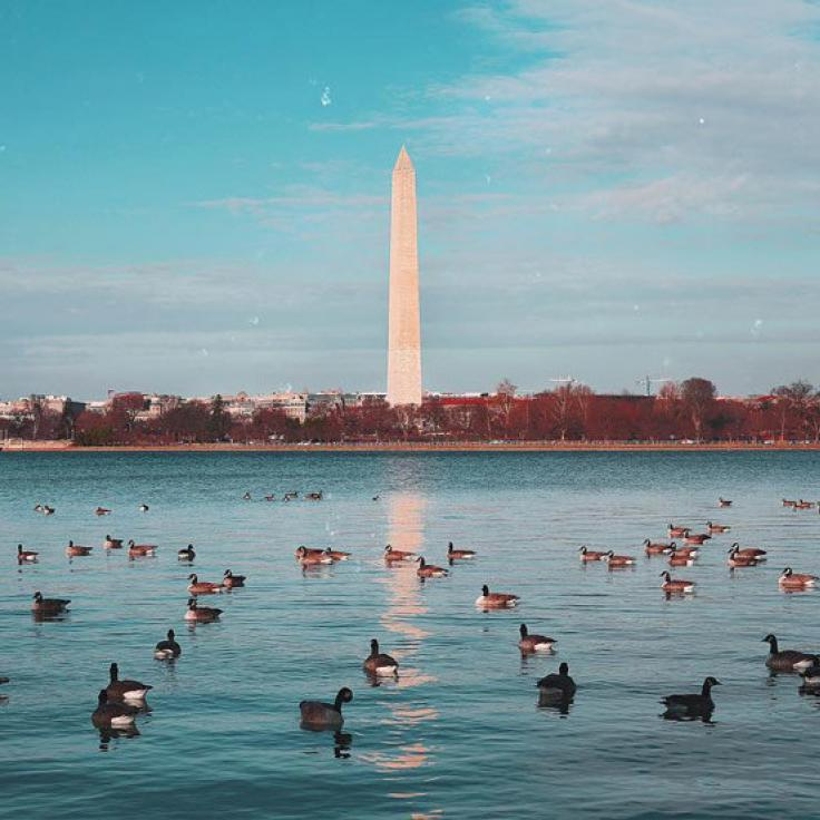 @wittenkitten - Winter view of Washington Monument from across the Tidal Basin - Winter in Washington, DC